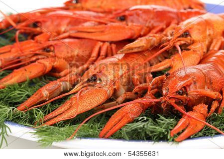 Tasty boiled crayfishes with fennel on plate close-up