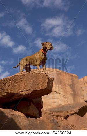 Dog On The Top Of The Cliff