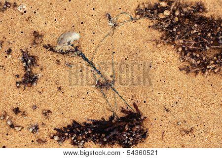 Marine Stinger in Queensland