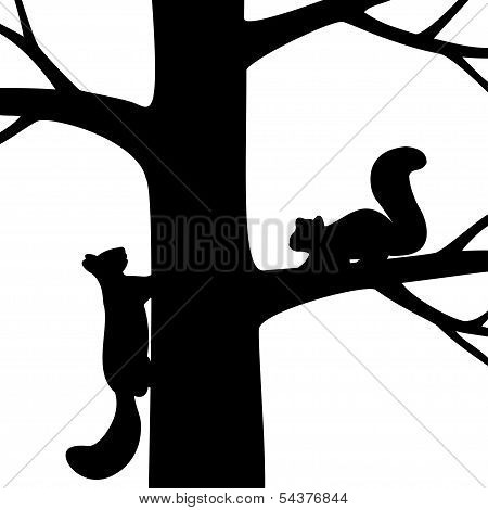 Two squirrel on the tree.