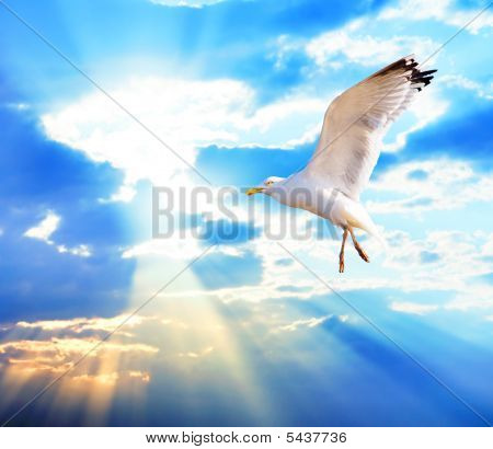Majestic Bird Against Sunset Sky