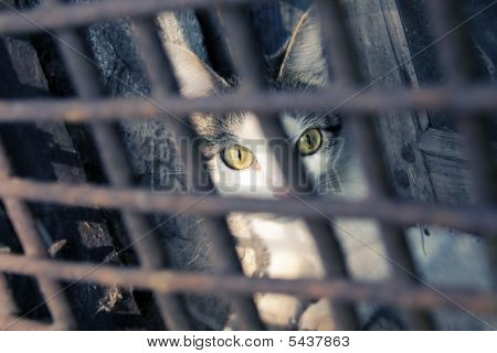 Katze In einem Käfig.