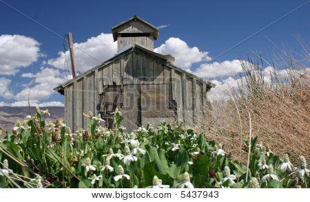 Barn In Field With Flowers