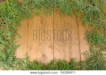 Thuja branches on wooden background
