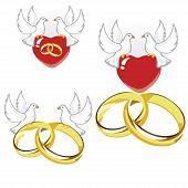 pic of ring-dove  - Wedding rings - JPG