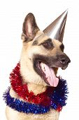 stock photo of alsatian  - Alsatian dog ready to celebrate the New Year - JPG