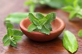 stock photo of substitutes  - Stevia with other medicinal herbs close up - JPG