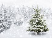 stock photo of conifers  - Outdoor shot of a nice little fir tree in thick snow for the perfect Christmas mood - JPG