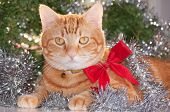 Ginger tabby cat wearing a red bow, with silver tinsel and green wreath background