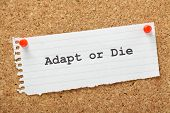 stock photo of overcoming obstacles  - Adapt or Die typed on a piece of lined paper and pinned to a cork notice board - JPG