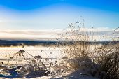 stock photo of pampas grass  - grass silhouetted against a blue sky a beautiful cold winter day by a lake - JPG