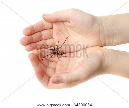 Spider In The Childrens Hands