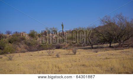 Sonoran Desert Spring Daytime Scene