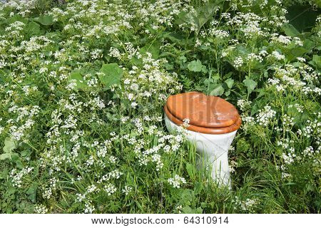 Closeup Of A Lavatory Bowl Between Wild Plants And Flowers