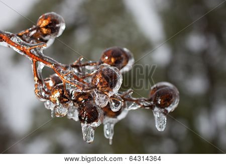 Dripping Bulbs