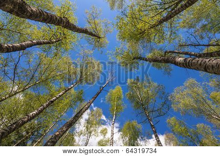 Looking Up To The Sky In Forest