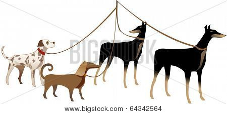 Vector illustration of four dogs