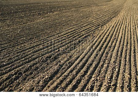 Line With Seeds On Agriculture Field Soil
