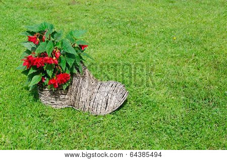 Shoe Flower Pot With Begonias. Rural Decoration