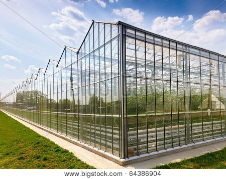 greenhouse vegetable production
