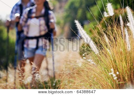A couple walking along a hiking trail with selective focus on wilderness plantation