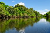 image of rainforest animal  - Amazonas landscape - JPG
