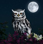 image of owl eyes  - an owl on a branch with flowers in the night with full moon - JPG