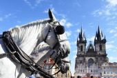 foto of blinders  - Carriage and pair horses at Old Square Prague Chech republic - JPG
