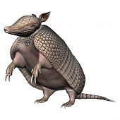 pic of armadillo  - 3D digital render of a Armadillos a New World placental mammal with a leathery armor shell isolated on white background - JPG