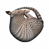 picture of armadillo  - 3D digital render of a Armadillos a New World placental mammal with a leathery armor shell isolated on white background - JPG