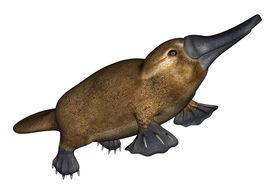 picture of aquatic animals  - 3D digital render of a semi - JPG