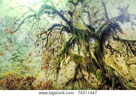 Forest in Olympic National Park, Washington State