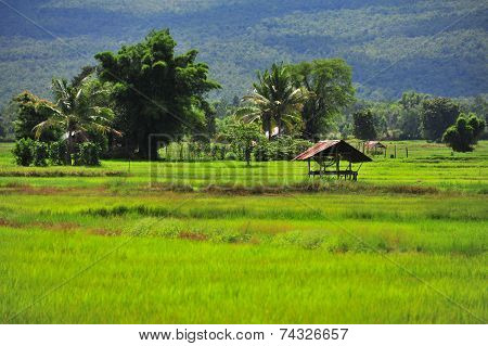 Mountain and farm in Thailand
