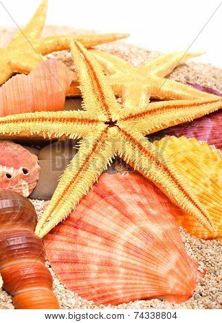 Starfish, Seashells And  Cockleshells On The Sand