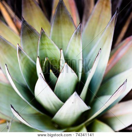 Endemic Plant From Mount Roraima In Venezuela