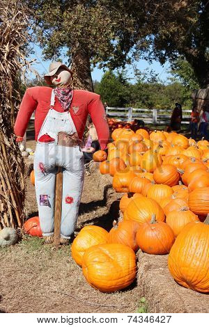 Scary scarecrow on a pumpkin patch