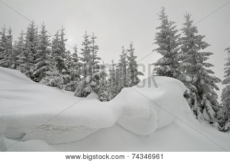 Christmas view. Snow-covered forest in the mountains. Landscape in gray tones overcast day. The sun shines through the clouds. Carpathians, Ukraine, Europe