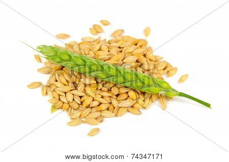 Barley Grains And Ear Isolated On White Background