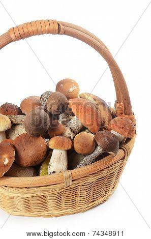 The raw boletus edulis in a basket