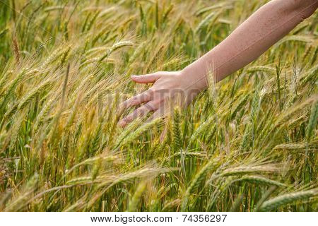 Hand Over Rye