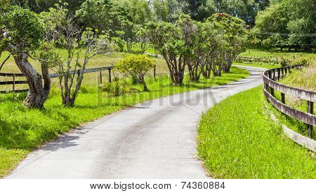 The Small Winding Road Through Farmland And Green Trees Scene.