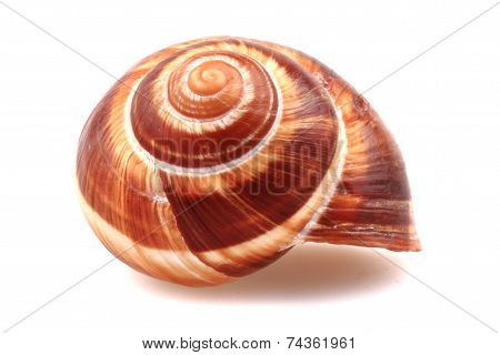 Snail Shell Isolated