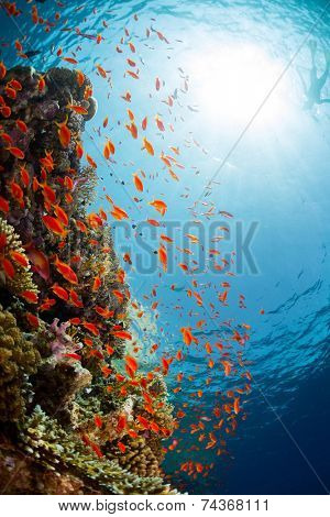 Underwater shot of the coral reef in Ras Muhammad National Park, Egypt