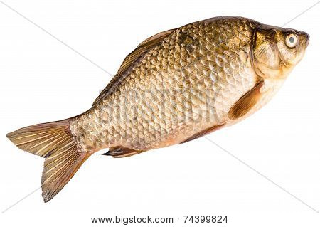 Crucian Isolated On White