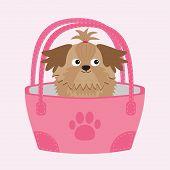 foto of dog breed shih-tzu  - Little glamour tan Shih Tzu dog in the bag - JPG