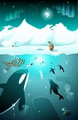 picture of eskimos  - Arctic underwater marine life with whale - JPG