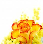 picture of yellow rose  - Red and yellow rose arrangement photographed on white background - JPG