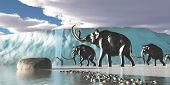 picture of mammoth  - A herd of Woolly Mammoths encounter a huge glacier covering the Arctic territory - JPG