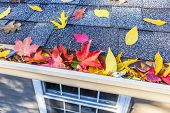 image of shingles  - Colorful fall leaves in the gutter on a roof - JPG