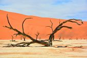 stock photo of dead-line  - Deadvlei is a white clay pan located near the more famous salt pan of Sossusvlei - JPG